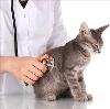 Ветеринарные клиники в Куркино